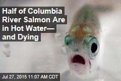 Half of Columbia River Salmon Are in Hot Water— and Dying