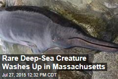 Rare Deep-Sea Creature Washes Up in Mass.