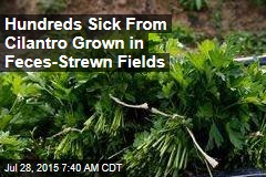Hundreds Sick From Cilantro Grown in TP-Strewn Fields