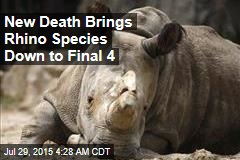 Rhino Species Down to Final 4