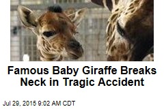 Famous Baby Giraffe Breaks Neck in Tragic Accident