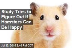 Study Tries to Figure Out If Hamsters Can Be Happy