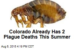 Colorado Already Has 2 Plague Deaths This Summer