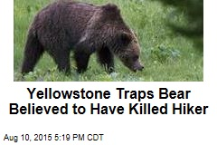 Yellowstone Traps Bear Believed to Have Killed Hiker