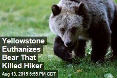 Yellowstone Euthanizes Bear That Killed Hiker
