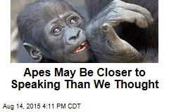 Apes May Be Closer to Speaking Than We Thought