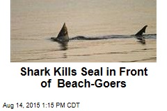 Shark Kills Seal in Front of Beach-Goers