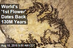World's '1st Flower' Dates Back 130M Years