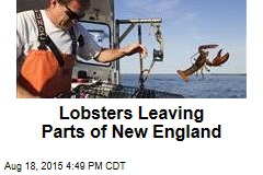 Lobsters Leaving Parts of New England