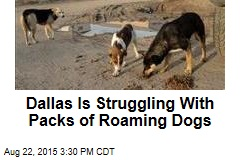 Dallas Is Struggling With Packs of Roaming Dogs