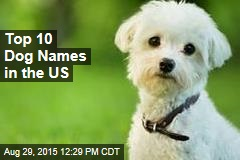 Top 10 Dog Names in the US