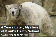 4 Years Later, Mystery of Knut's Death Solved
