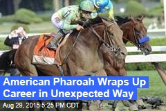 American Pharoah Wraps Up Career in Unexpected Way
