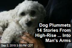 Dog Plummets 14 Stories From High-Rise ... Into Man's Arms