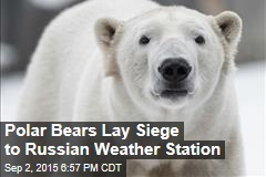 Polar Bears Lay Siege to Russian Weather Station