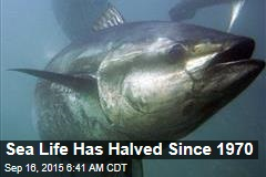 Sea Life Has Halved Since 1970