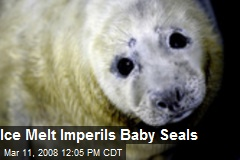 Ice Melt Imperils Baby Seals