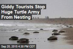 'Eco-Tourist Mob' Blocks Nesting Sea Turtles