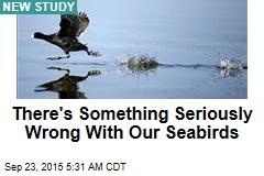 Global Population of Seabirds Is Nosediving
