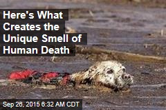 Here's What Creates the Unique Smell of Human Death