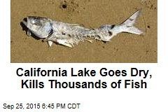 California Lake Goes Dry, Kills Thousands of Fish