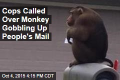 Cops Called Over Monkey Gobbling Up People's Mail