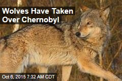 Wolves Have Taken Over Chernobyl