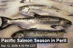 Pacific Salmon Season in Peril
