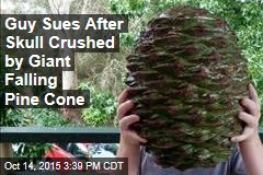 Guy Sues After Skull Crushed by Giant Falling Pine Cone