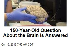 150-Year-Old Question About the Brain Is Answered