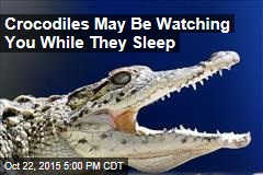 Crocodiles May Be Watching You While They Sleep