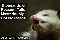 Thousands of Possum Tails Mysteriously Dot NZ Roads