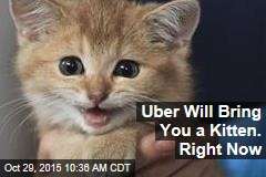 Uber Will Bring You a Kitten. Right Now