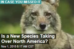 Is a New Species Taking Over North America?