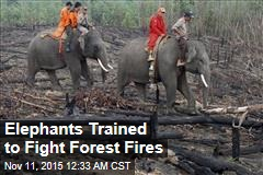 Elephants Trained to Fight Forest Fires
