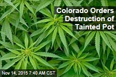 Colorado Orders Destruction of Tainted Pot