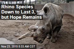 Rhino Species Down to Last 3, But Hope Remains