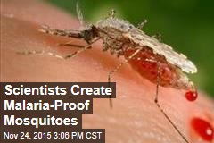 Scientists Create Malaria-Proof Mosquitoes