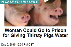Woman Could Go to Prison for Giving Thirsty Pigs Water