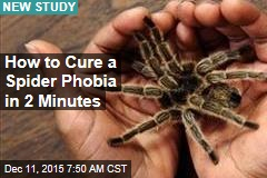 How to Cure a Spider Phobia in 2 Minutes