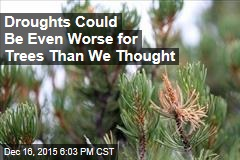 Droughts Could Be Even Worse for Trees Than We Thought