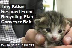 Tiny Kitten Rescued From Recycling Plant Conveyer Belt