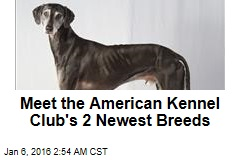 Meet the American Kennel Club's 2 Newest Breeds