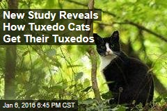New Study Reveals How Tuxedo Cats Get Their Tuxedos