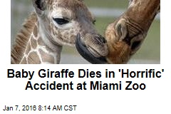 Baby Giraffe Dies in 'Horrific' Accident at Miami Zoo