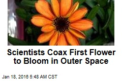 Scientists Coax First Flower to Bloom in Outer Space