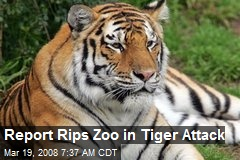 Report Rips Zoo in Tiger Attack