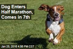 Dog Enters Half Marathon, Comes in 7th