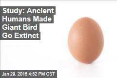Study: Ancient Humans Made Giant Bird Go Extinct