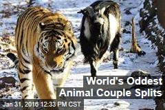 World's Oddest Animal Couple Splits